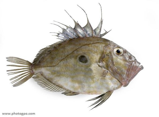 poisson saint pierre
