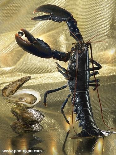 homard huitre